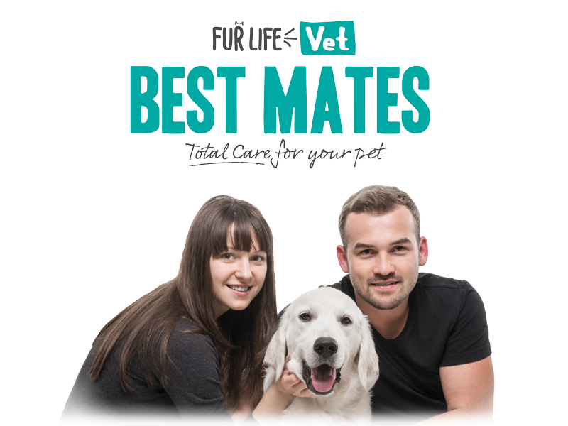 Introducing Best Mates